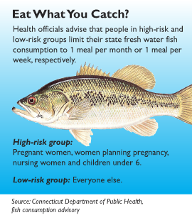 Unhealthy mercury levels persist in our waterways and fish for What fish is high in mercury